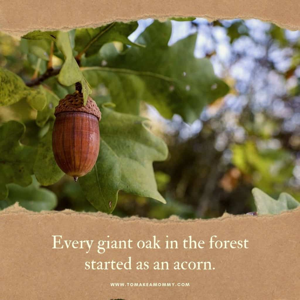 Motivation and affirmations for fertility in the fall- every oak started as an acorn! #fertility #infertility