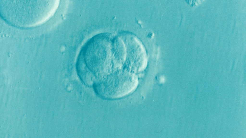 CoQ10 before IVF for infertility can boost egg quality, egg count, number of eggs fertilized, and response to stimulation!